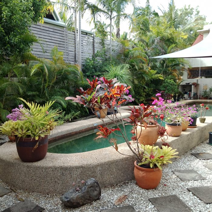 Swimming Pool with colourful pot plants all around