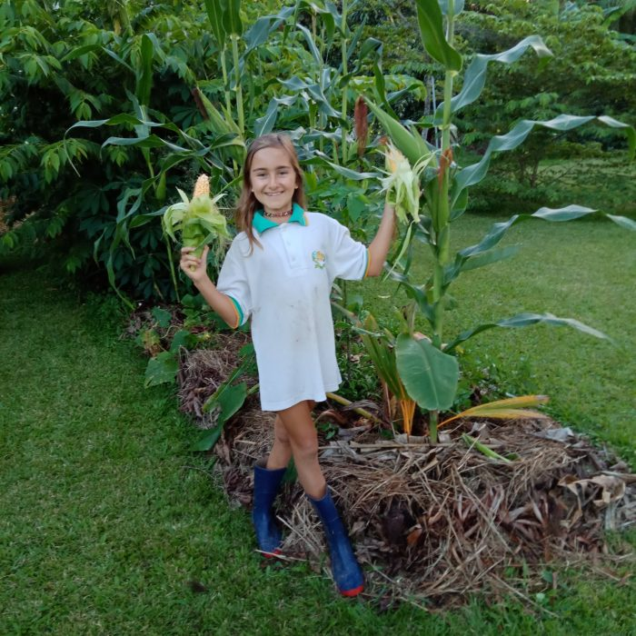 girl holding freshly harvested corn cobs in both hands