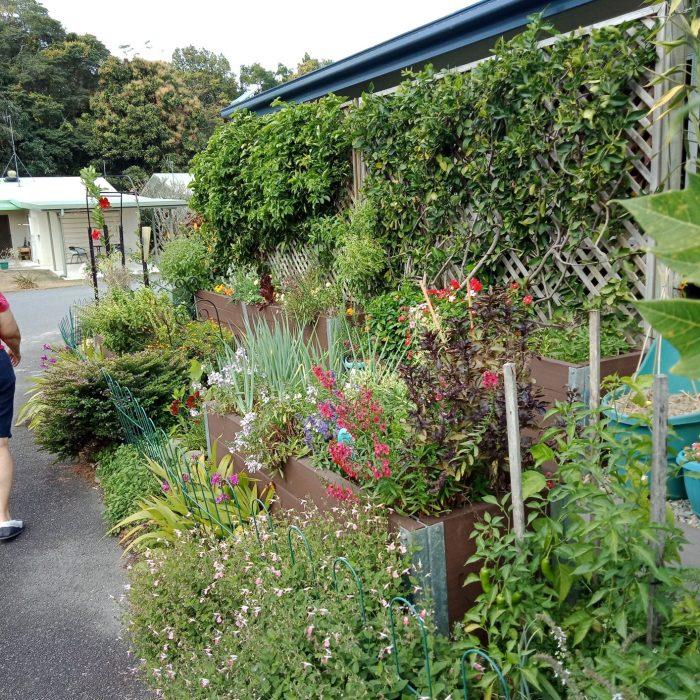 Flower Frontyard